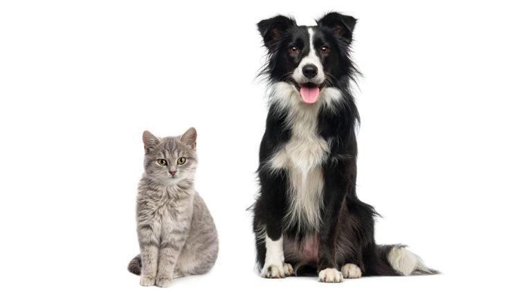 Black dog and gray cat sitting