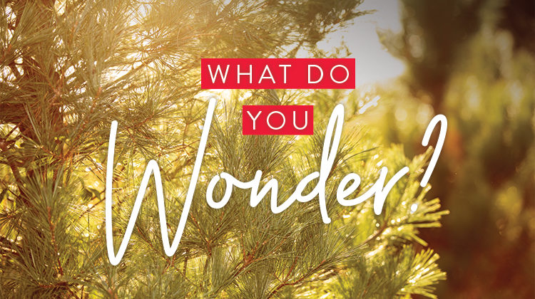 What Do You Wonder?